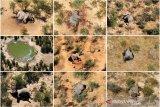Hasil tes ungkap kematian misterius ratusan gajah di Botswana