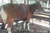 Dompet Dhuafa targetkan 200 hewan kurban disebar di Sumsel