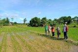 Malinau jadi daerah penyuplai kebutuhan pangan untuk IKN
