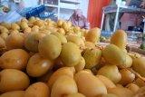 Menggiurkan, bisnis kurma muda di Padang raih omzet Rp50 juta