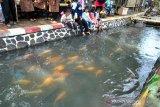 Warga saat menyaksikan ikan dan dan berbagai jenis sayuran yang ditanam secara akuaponik pada selokan ikan di Kampung Tangguh Lembur Tohaga Kujang Bogor Lodaya, Kelurahan Bubulak, Kota Bogor, Provinsi Jawa Barat, Rabu (1/7/2020). Kampung Tangguh yang didirikan oleh Pemerintah Kota Bogor bersama Polresta Bogor Kota dalam rangka HUT ke-74 Bhayangkara tahun 2020 tersebut sebagai upaya ketahanan pangan bagi warga yang terkena dampak pandemi COVID-19. (ANTARA FOTO/Arif Firmansyah).