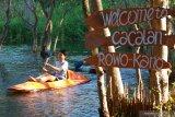 Wisatawan bermain kano di Rowo Cacalan, Banyuwangi, Jawa Timur, Sabtu (4/7/2020). Wahana bermain kano merupakan salah satu wisata yang ramai dikunjungi, sejak dibukanya kembali tempat wisata di Banyuwangi yang telah terverifikasi sehat oleh gugus tugas percepatan penanganan COVID-19. Antara Jatim/Budi Candra Setya/zk