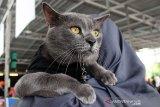 Ganti makanan kucing bisa sebabkan bulunya rontok?