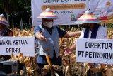 Petrokimia Gresik meningkatkan produktivitas pertanian di tengah pandemi