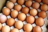 Harga telur ayam di pasar Kota Jayapura turun