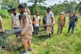 Karantina Pertanian Lampung lepasliarkan satwa hasil penyelundupan
