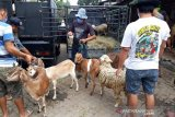 Dampak COVID-19, penjualan hewan kurban di Solo lesu
