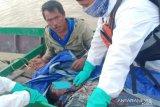 Azimain, Nelayan Hilang di Sebuku Ditemukan Tak Bernyawa Lagi