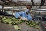 Ekspor rempah Indonesia naik