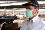 Putus penyebaran penyakit, Karantina Pertanian Lampung awasi penyakit hewan ternak