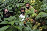 Edukasi kepada petani kopi