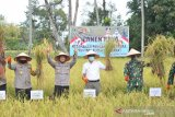 Panen raya Sungai Pisang, spirit memajukan daerah