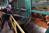 PT Hindoli tutup pabrik sawit di Muba karena karyawan positif COVID-19