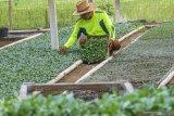 Pelatihan kostratani diharapkan cetak banyak wirausaha pertanian