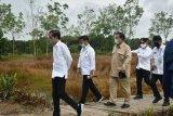 Prabowo targetkan 1,4 juta hektare lahan singkong akhir 2025