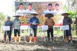 Jelang pilkada, NasDem Sulteng gagas program tingkatkan produksi jagung