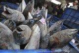 Nelayan menyiapkan ikan untuk dilelang di tempat pelelangan ikan Karangsong, Indramayu, Jawa Barat, Sabtu (11/7/2020). Badan Pusat Statistik (BPS) mencatat volume ekspor perikanan periode Januari-Maret 2020 mencapai 295,13 ribu ton atau meningkat 10,96 persen dibanding periode yang sama tahun 2019. ANTARA JABAR/Dedhez Anggara/agr