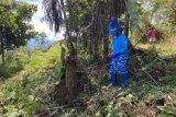 Partai Demokrat Papua buka lahan 10 hektare ajak warga berkebun