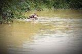 Terjebak, penyuluh pertanian nekat terobos banjir menggunakan rakit batang pisang