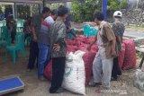 Petani bawang merah kenakan uang muka 10 persen kepada pedagang