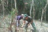 Satgas TMMD Ini bantu warga tanam kelapa sawit.