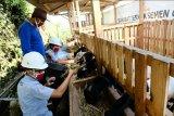 Dekatkan anak muda dengan peternakan dan pertanian, Semen Gresik rintis lahirnya UMKM lokal