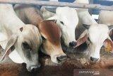 Cegah penularan Corona, pengurus Masjid Agung Medan tiadakan penyembelihan hewan kurban
