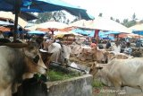 Pemkot Padang ingatkan masyarakat tidak sembelih sapi betina produktif untuk kurban