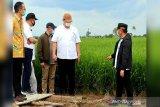 Pemerintah siapkan anggaran jaringan irigasi 'food estate' 2021-2023