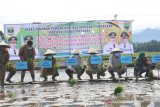 Petani Sumbar didorong percepatan tanam padi menuju swasembada pangan
