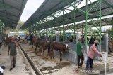 Pedagang ternak di Kulon Progo tak lengkapi hewan kurban dengan SKSH