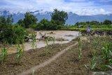 Menjamin ketahanan pangan  di Sulawesi Tengah