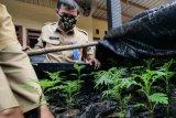 Disperta Kota Madiun bagikan 200 bibit marigold kepada petani
