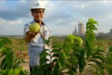 Semen Gresik ubah lahan tandus jadi sentra buah