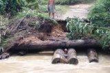 Gumas segera perbaiki jembatan Masukih yang hanyut diterjang arus sungai