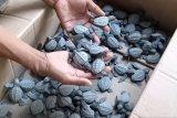 Warga Kelurahan Pasia Nan Tigo Padang serahkan 44 butir telur penyu yang ditemukan di pantai Pasia Kandang