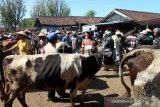 Perdagangan hewan kurban di Boyolali mulai meningkat di tengah pandemi