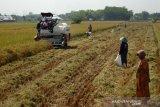 Kementan memperluas areal tanam padi 250.000 hektare