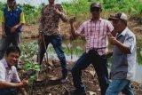 Komunitas Pohon Indonesia OKU tanam  ratusan bibit pohon