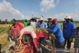 Petani Kulon Progo  panen raya padi masa tanam kedua