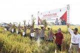 Kapolda Jateng lakukan panen raya padi di Pemalang
