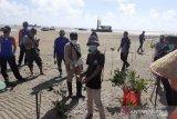 Pemprov Bangka Belitung tanam 5.000 bibit bakau di Pantai Bhaskara Bhakti
