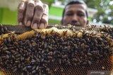 RS TNI AD Palangka Raya bantu obati pasien COVID-19 juga gunakan madu murni