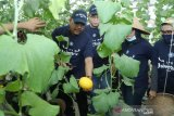 Kagum teknologi pertanian IPB, Gus Jazilul ajak milenial turun bertani