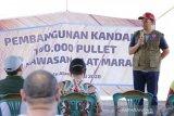 Gubernur NTB mencanangkan pembangunan 100 ribu pullet ayam petelur