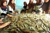 Menteri KP: Indonesia berpeluang rebut pasar udang dunia