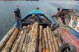 Tim KLHK tangkap pelaku pembalakan liar di SM Padang Sugihan