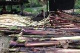 Badan Karantina Pertanian dorong ragam produk ekspor di Sulut