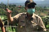 Dragon fruit garden in Batuhampar has potential to be agrotourism: Nasrul Abit