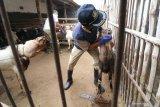 Kementan ingatkan masyarakat beli hewan kurban di lokasi berizin pemda